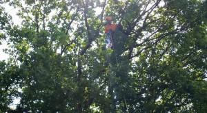 Missglückte Landung im Baum - Danke für die schnelle Hilfe